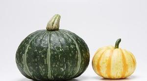 かぼちゃ(南瓜について)