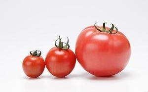 トマトについて