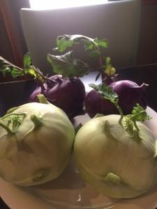 宮脇さんが栽培したコールラビです。サラダや炒めもの料理にも合います。