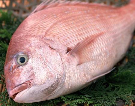 ここ数十年で起こっている、鯛の食卓事情が静かに変化しています。
