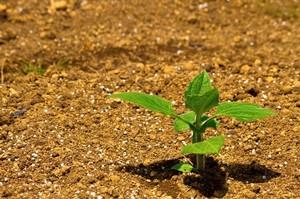 草引きと循環農法についての個人的な見解