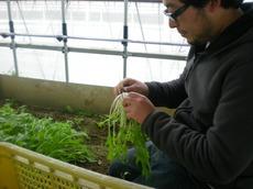 小松菜・水菜で有名な都倉農園さんです。