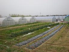 都倉農園さんの全景