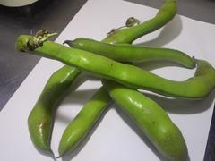 ファーべ(イタリアのそら豆)