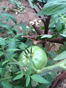 野菜がすくすくと育っています。